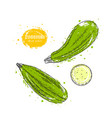 zucchini hand drawn in the vector image vector image