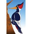 woodpecker cartoon vector image vector image