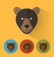 bear portrait with flat design vector image