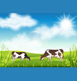 cows grazing in a summer meadow vector image vector image