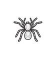 spider tarantula hand drawn sketch icon vector image