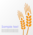 Wheat background eps10 vector image