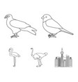 sparrow and other species birds set collection vector image